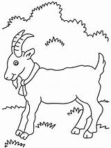 Goat Coloring Pages Goats Billy Three Gruff Printable Mountain Preschool Printables Animal Drawing Outline Procoloring Colouring Desenhos Farm Animals Disney sketch template