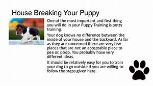 Pitbull puppies potty training for How to train your dog to pee