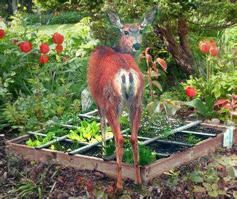 Animal Garden Pests Control