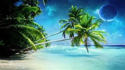 Palm Tree Beach Trees Bonsai Backgrounds Cool