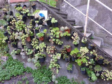 giardino verticale piccolo giardino in verticale di piante grasse
