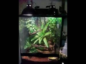 Do Your Reptiles Feel At Home? giant day gecko exo terra ...