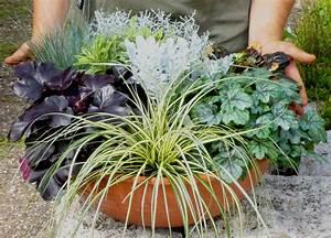 Große Winterharte Kübelpflanzen : schale bepflanzt gro 45 cm pflanzen versand f r die ~ Michelbontemps.com Haus und Dekorationen