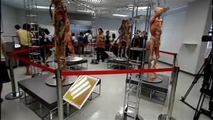 Museum Of Human Body