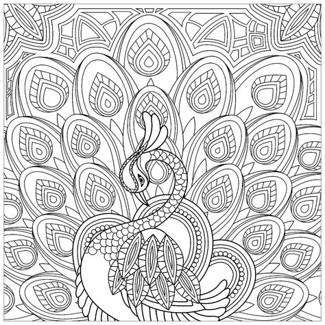 squared coloring page   peacock peacocks adult coloring pages