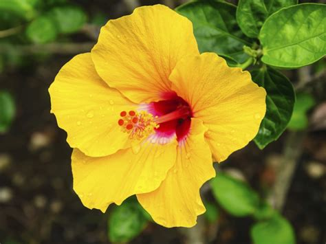 flower kinds with pictures an in depth classification of the different types of flowers
