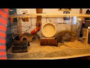 Pflanzen Terrarium Einrichten : neues hamsterterrarium hamster haltung teil 1 die einrichtung youtube ~ Orissabook.com Haus und Dekorationen