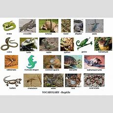 Learn English Vocabulary Through Pictures 100+ Animal Names  Eslbuzz Learning English