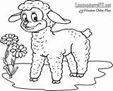 Lamb Coloring Pages Lion Drawing Clip March Line Printable Mary Had Children Londonderry Roaring Kindergarten Sheep Sheet Worksheet Para Colorear sketch template