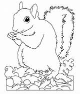 Squirrel Coloring Pages Cute Printable Animal Sheets Squirrels Wild Popular Rescue Getdrawings Getcolorings Print Coloringhome sketch template