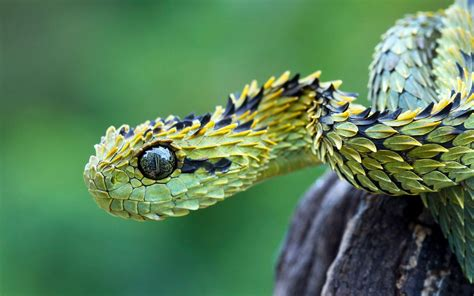 unusual snakes barbed green snake camouflage hd wallpaper