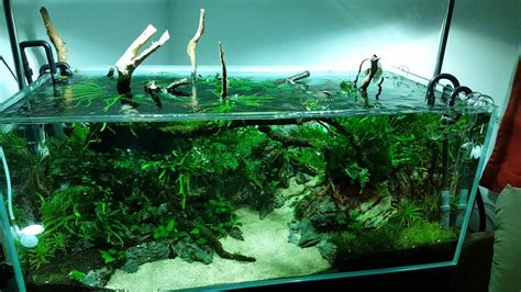 Nature Aquascape by Nature Aquascape