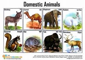 Names Of Animals India - WallsKid