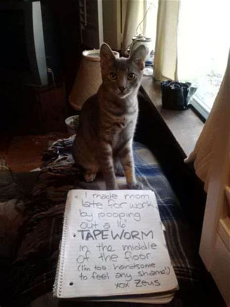 cat shaming  pics
