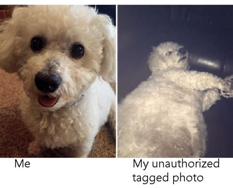 34 Memes That Capture The Struggle Of Profile Vs Tagged