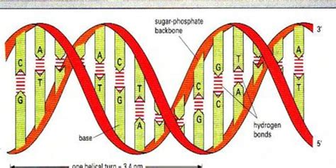 structure  dna assignment point