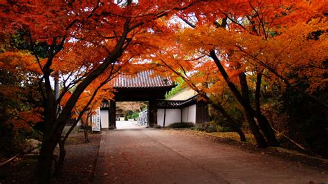 autumn japan wallpapers  wallpapers art wallpapers