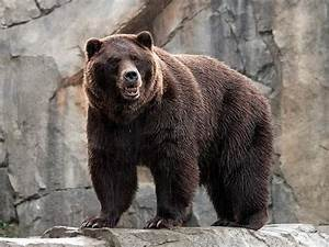 The Science Of How To Survive A Bear Attack
