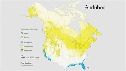 Audubon Range Swallow Tree Climate Change Bigger