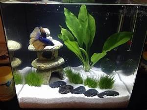 Deco Aquarium Zen : introducing enzo and his new zen garden bettafish ~ Melissatoandfro.com Idées de Décoration