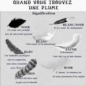 Signification Plume Noire : plumes et leurs significations ~ Carolinahurricanesstore.com Idées de Décoration