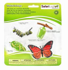 Butterfly Life Cycle Figurines  Toys For Curious Kids