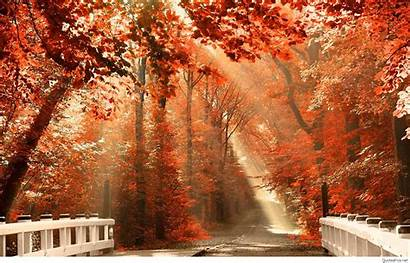 Season Fall Autumn Wallpapers Background Nature Desktop
