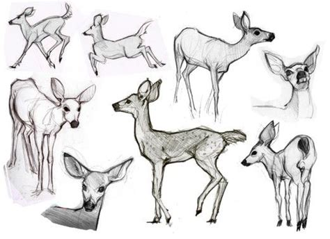 draw animals deer character design references