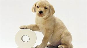 Dog potty training common potty training problems for Dog potty training problems
