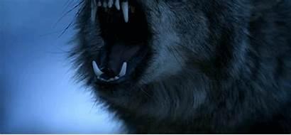 Wattpad Aesthetic Wolf Werewolf Teen Angry Sleeping