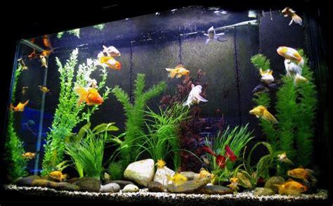 aquarium decorations the aquarium setup filtration and maintenance site