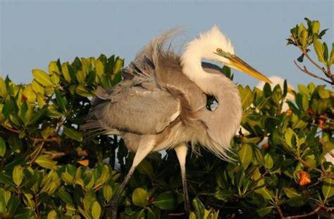 Everglades Airboat Tour Kosten by Everglades City Beste Airboat Tour In Den Everglades