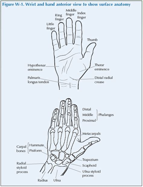 The Wrist Hand Global Alliance For Musculoskeletal Health