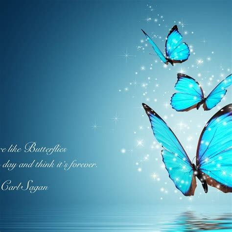 butterfly quotes wallpaper  desktop mobile