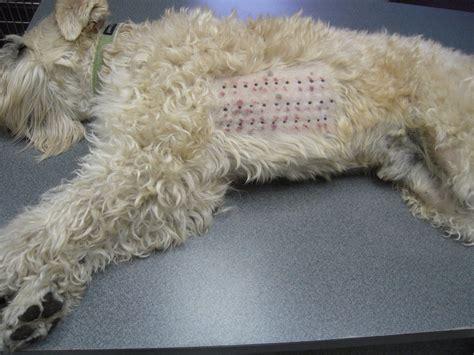 signs  dog    allergic reaction  dog
