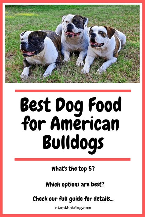 dog food  american bulldogs perfect choices
