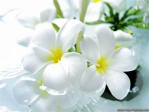 Beautiful White Flowers wallpaper | 1024x768 | #22611