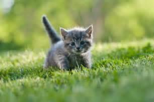 gray cat names names for gray kittens slideshow