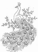 Coloring Feather Bird Printable Turkey Birds Peacock Getcolorings Colorings Fea sketch template