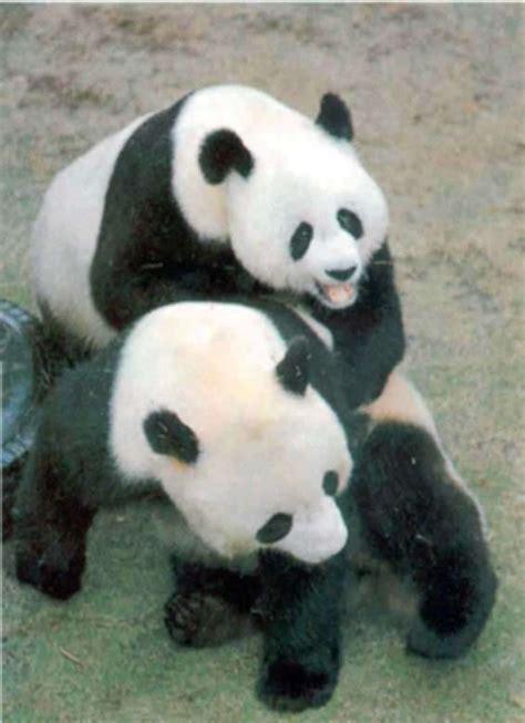 pandavations  animal rights ads