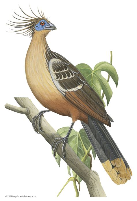 10 Bizarre Birds Britannica com