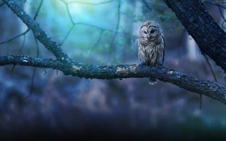 owl fantasy abstract background wallpapers  desktop