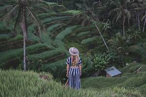 Tegalalang Rice Terrace Guide For 2020