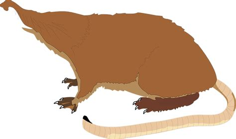 vector graphic mole long tail blind  image