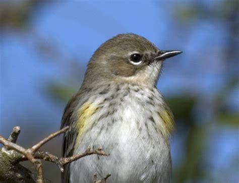 sw louisiana birds