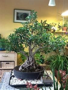 Pot Grande Taille : delightful pot bonsai grande taille 2 homeezy ~ Teatrodelosmanantiales.com Idées de Décoration