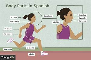 What Are The Names For Body Parts In Spanish