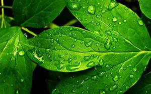 Water drops on a Leaf HD wallpaper | HD Latest Wallpapers