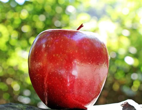 Free picture: food, red apple, nutrition, fruit, delicious ...