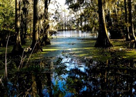 cypress swamp  photo  north carolina south trekearth